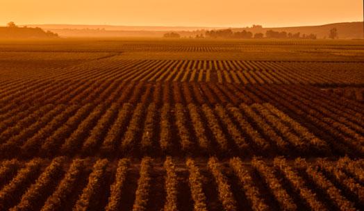 Stellar Organics wine producer