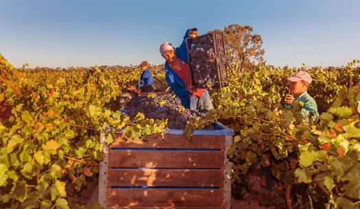 Anura Vineyards wine producer