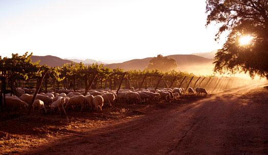 Bodega Colomé wine producer