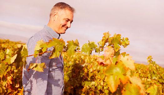 Bodegas D. Mateos wine producer