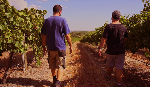 First Drop Wines wine producer