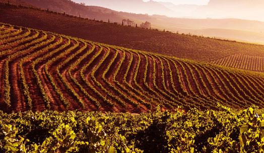 Jordan Wine Estate wine producer