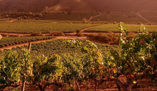 Viña Chocalan wine producer