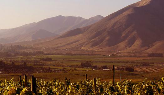 Viña Mayu wine producer