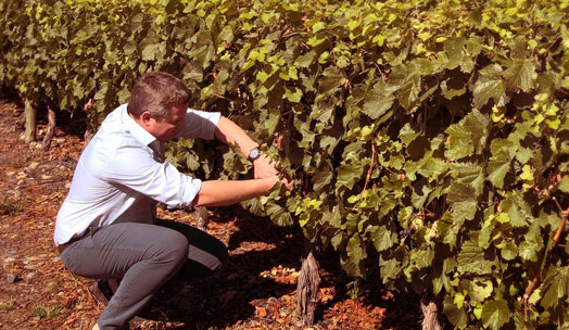 Orion Wines wine producer